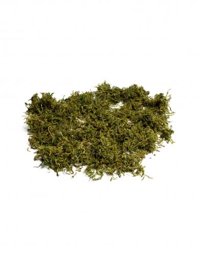 Mousse végétale séchée 50 gr
