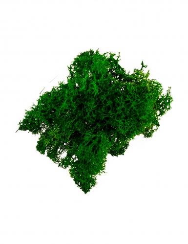 Mousse végétale vert foncé 30 g