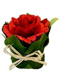 Rose rouge dans un pot en feuillage 8 x 6 cm