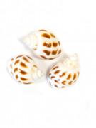 6 Petits coquillages de décoration 3 x 2,5 cm