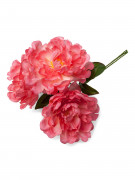 Bouquet 3 pivoines rose fuchsia