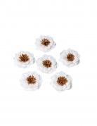 6 Fleurs en papier adhésives blanches pistille camel 5 cm
